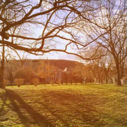 canada nature sun spring beautiful