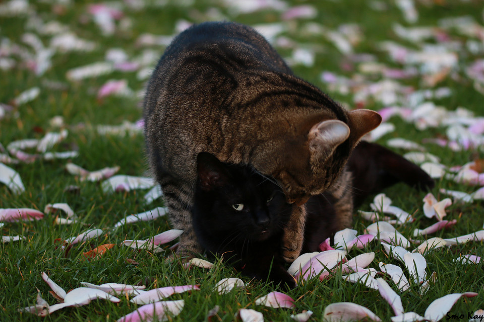 Von meinem Kumpel @altlechner unsere Katzen Dankeschön🙌  #cat  #mypet  #photography #petsandanimals #nature  #animals #cute