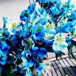 love blue flowers photo