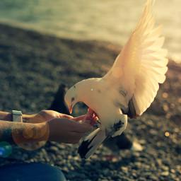 bird sea