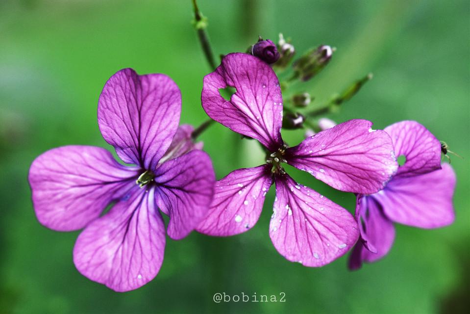 #photography #emotions #flower #flowers #wildflowers #macro