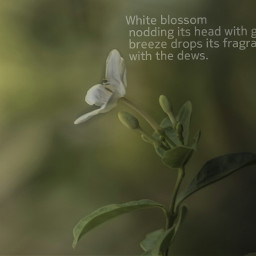 dailyinspiration poem nature flower pa