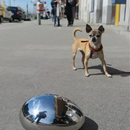 stone artistic dog