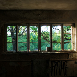 lostplaces window nature