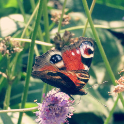 photography nature butterfly lightcros