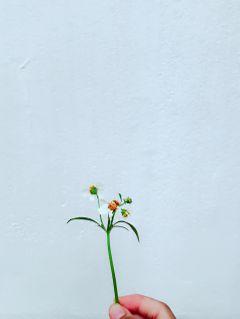 freetoedit remix flower