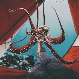 FreeToEdit octopus chillin