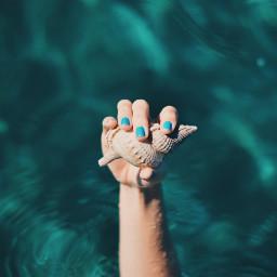 freetoedit water blue shell human