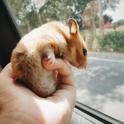 petsandanimals love cute photography hamster